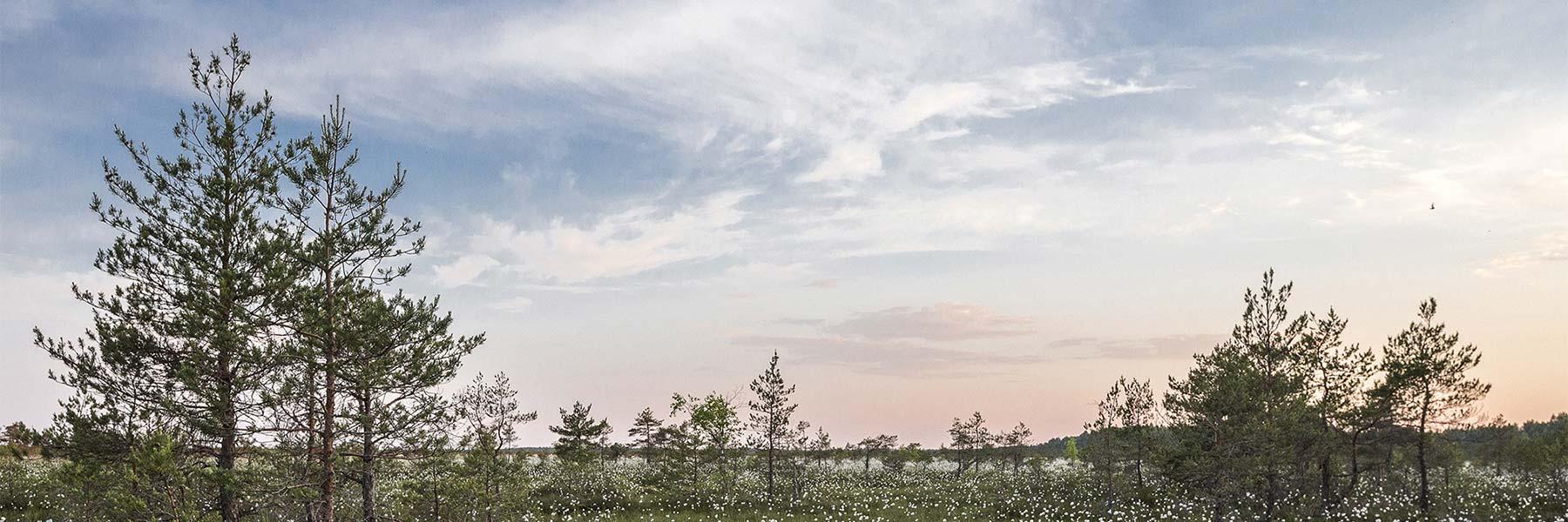 caroline_sada_landscape